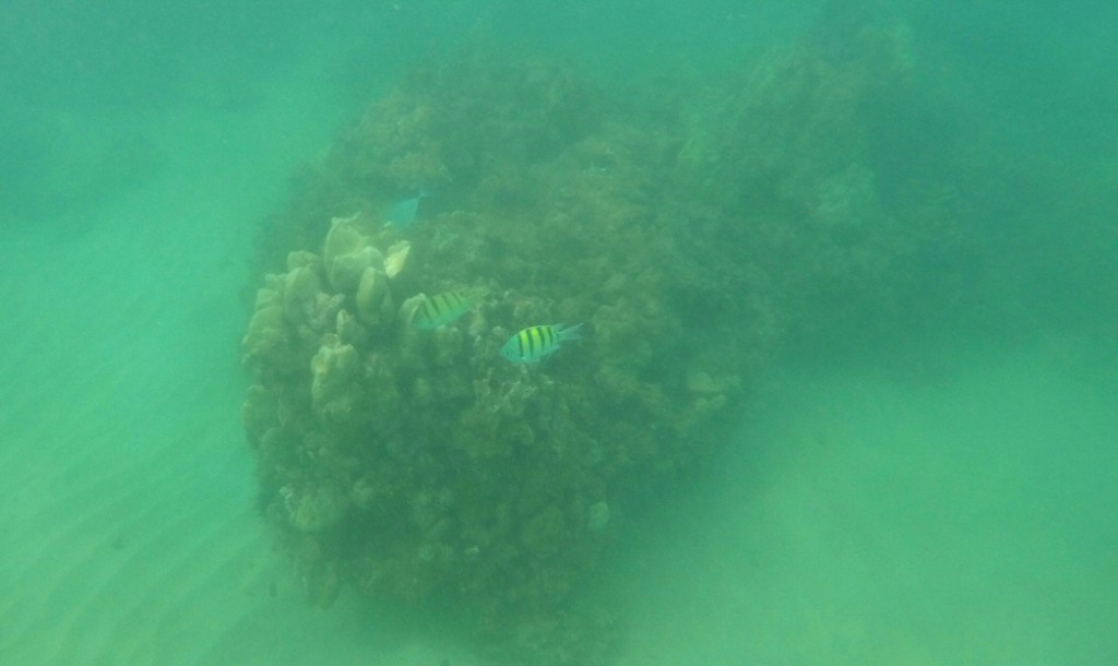 This doctored photo shows how crummy the water conditions were for snorkeling. We did see a lot of colorful fish, but we'll have to wait til next time for the whole experience!